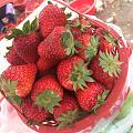 草莓吃起来 味道很好 价格不美丽