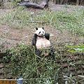 难得有阳光,周末熊猫馆一游