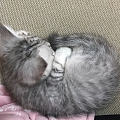 求助!猫癣怎么处理