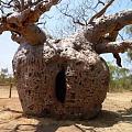 想要一颗这种树😊ཽ