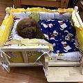 狗子的新床