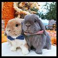 好可爱的兔几