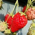吃完草莓🍓,好好享受初春的暖☀️