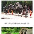 如果去泰国,拜托不要看任何,人组织和经营的大象表演啊……