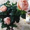 每次路过花店,都想抱着花回家养……