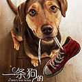 《一条狗的回家之路》请备好纸巾!