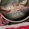 这是什么鱼 怎么吃