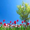 娜姐说文玩——我们的春天