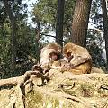 黔灵山猴趣