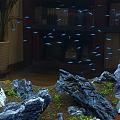 呈明书店里拍到的小鱼 像极了满天繁星和灯火阑珊