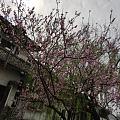 昨日才见桃花开, 今朝也许土里埋。 人生终究亦如此, 芳华一去不再来。