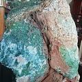 天然奇石.树化玉.