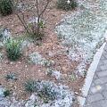 """又是一年下""""雪""""时"""