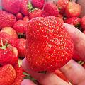 什么体质喝中药不能吃水果