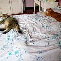 一个床头一个床尾,一定是又吵架了