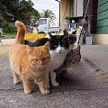 豆瓣爱猫用户猫脚司幽的今日画作,超可爱的真人化,坛子里猫奴多,搬过来共吸。 ...