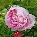 闲趣阅读第二弹,一个花仙的故事灌园叟晚逢仙女
