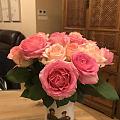 怒放的玫瑰