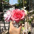 花给人带来的愉悦可真是非同一般
