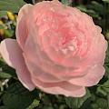女王终于开花了🌼and花园一角