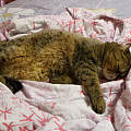 还是睡着的时候可爱