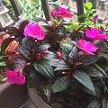 家婆家的花开得很漂亮,愿天下的母亲都幸福健康,母亲节快乐