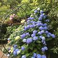 南方的雨季,很好,又可以偷懒不浇花了。