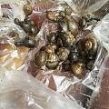 蜗牛泛滥吃花,打过两次农药也弄不死,一下雨就能抓一窝