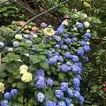 发会呆,细雨中美美的花园☔️