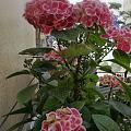 夏天到了,大太阳晒的,花花也得躲荫,只有仙人掌🌵类的越晒开的约灿烂。