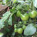 花园一角~山野农妇的蔬果园