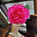 一早大宝贝送给我的花花🌸