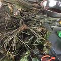 马上要端午节了粽子不能缺,尤其是蛋黄肉粽。