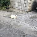 邻居家的小兔子
