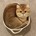 叠猫猫当队长可以分多少?