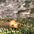 缅甸抹谷美景欣赏