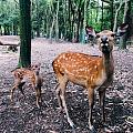 天气好,奈良喂鹿去。
