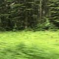 穿越黑森林,居然看到一堆水晶之类的石头。