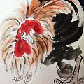 动物里最喜欢大公鸡