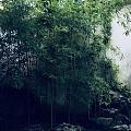 持续半月高温,今天午饭后苏州终于下了场雨,趁难的凉快的周末,去网师园看竹子、...