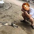 苏梅岛上的动物们