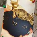 幫閨蜜家的貓做的周邊