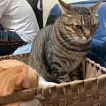 咪咪罩罩咪咪 猫害怕剪指甲,一时又找不到东西盖它的眼睛,于是想到了这个! 哎...