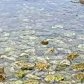 到海边呼吸新鲜空气,没想到清澈见底海水里,竟然有那么多的小鱼小虾和小螃蟹
