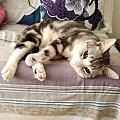 (水)晒下我家的猫  名字叫李耳王,特别粘人特别可爱 我从北京带回我老家,现...