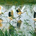江苏盐城——穿越春夏秋冬的黄海湿地