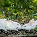 兔兔手牌!忘羡兔!