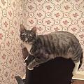 求推荐猫玩具,玩得精疲力尽停不下来能减肥的那种