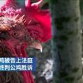 【法国#打鸣太响被起诉公鸡获胜诉#】