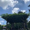 日本感受炎炎夏日